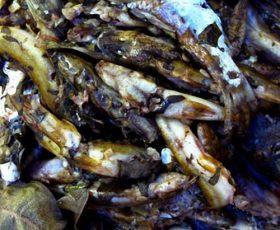 Cá bống vùi gio ngon nức mũi của Lai Châu