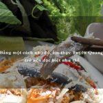Bằng một cách nào đó, ẩm thực Tuyên Quang trở nên đặc biệt như thế